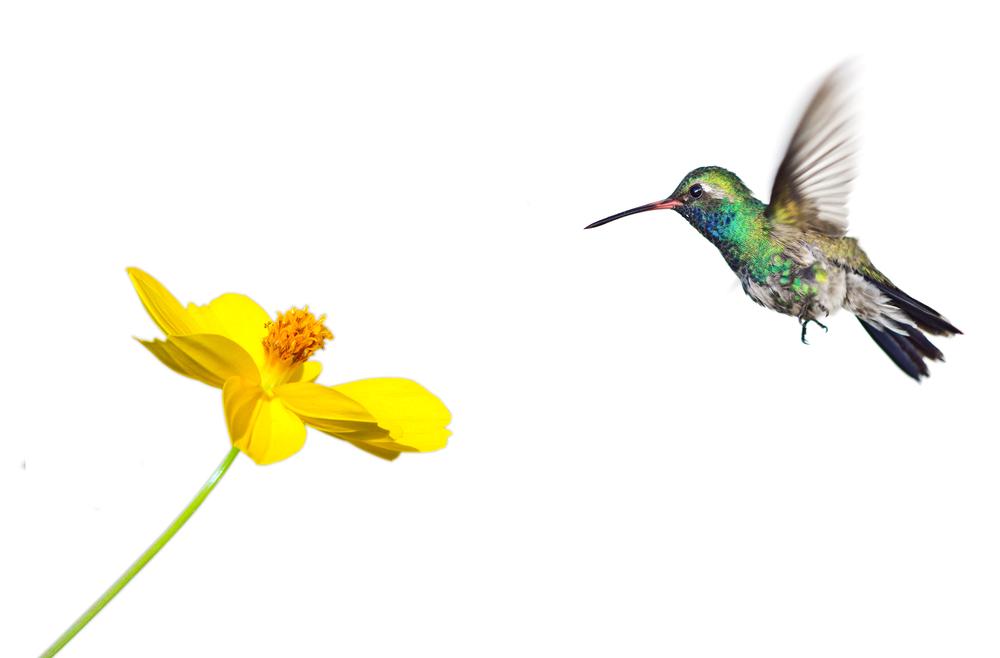 Amalthea fait sa part du colibri !